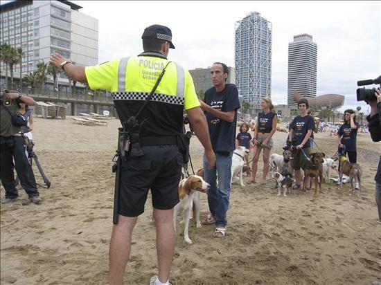 Perros sueltos en las ciudades
