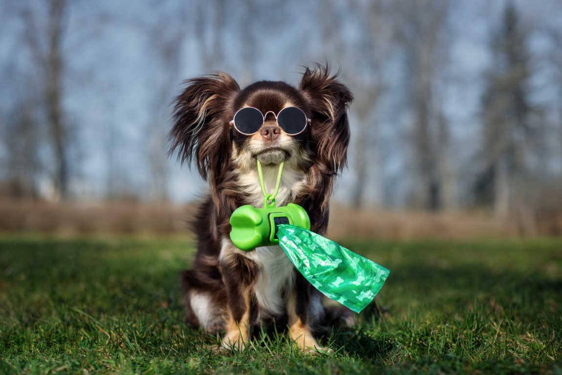 Los plásticos y las mascotas