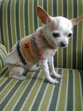 Convierte ropa de niños en ropa para perros