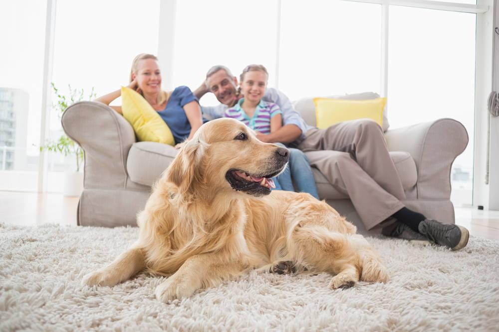 Mascotas y muebles, ¿relación imposible?