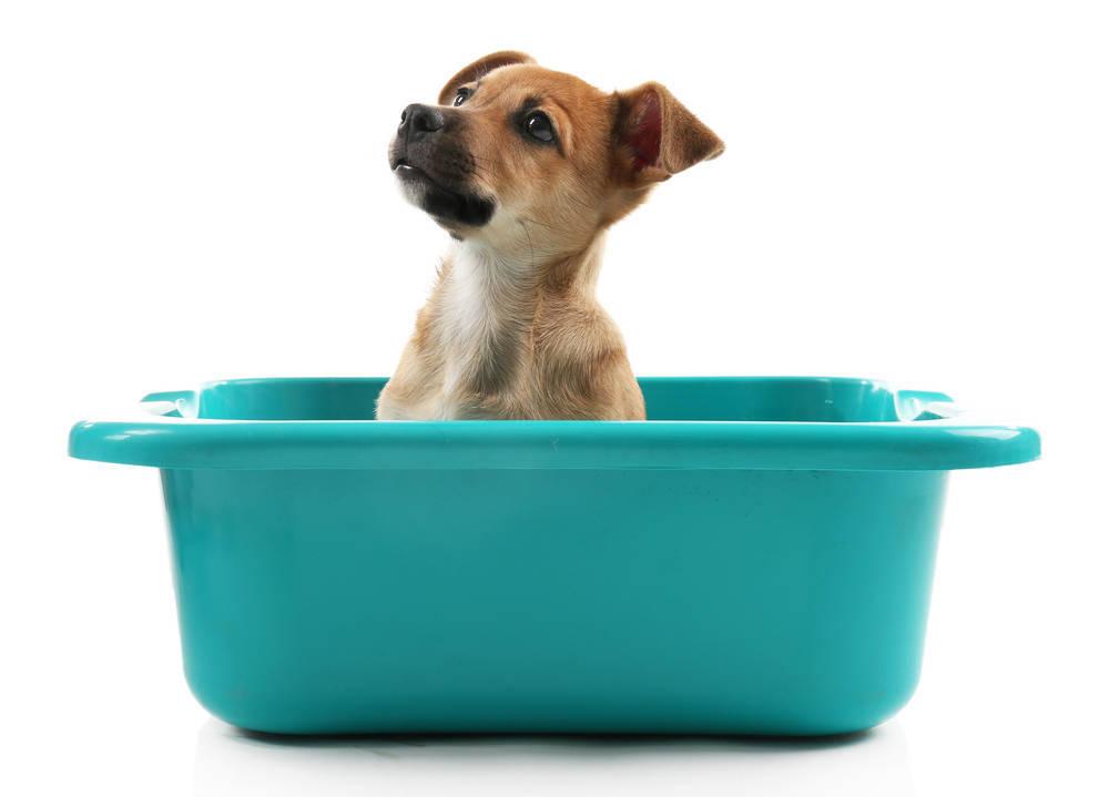Enseña a tu perro a ir al baño