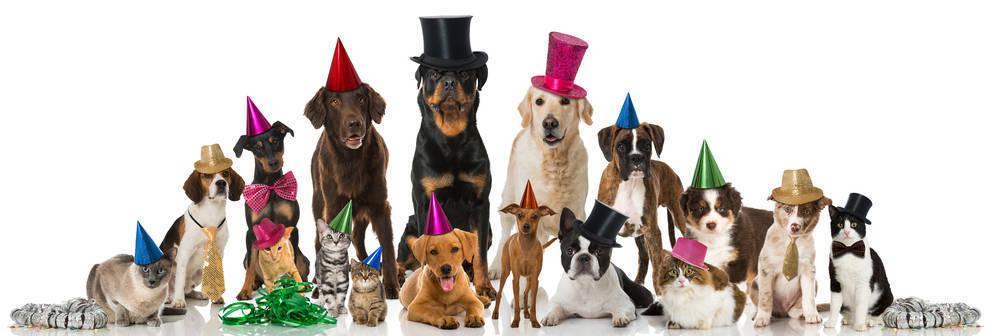 Una fiesta con mascotas