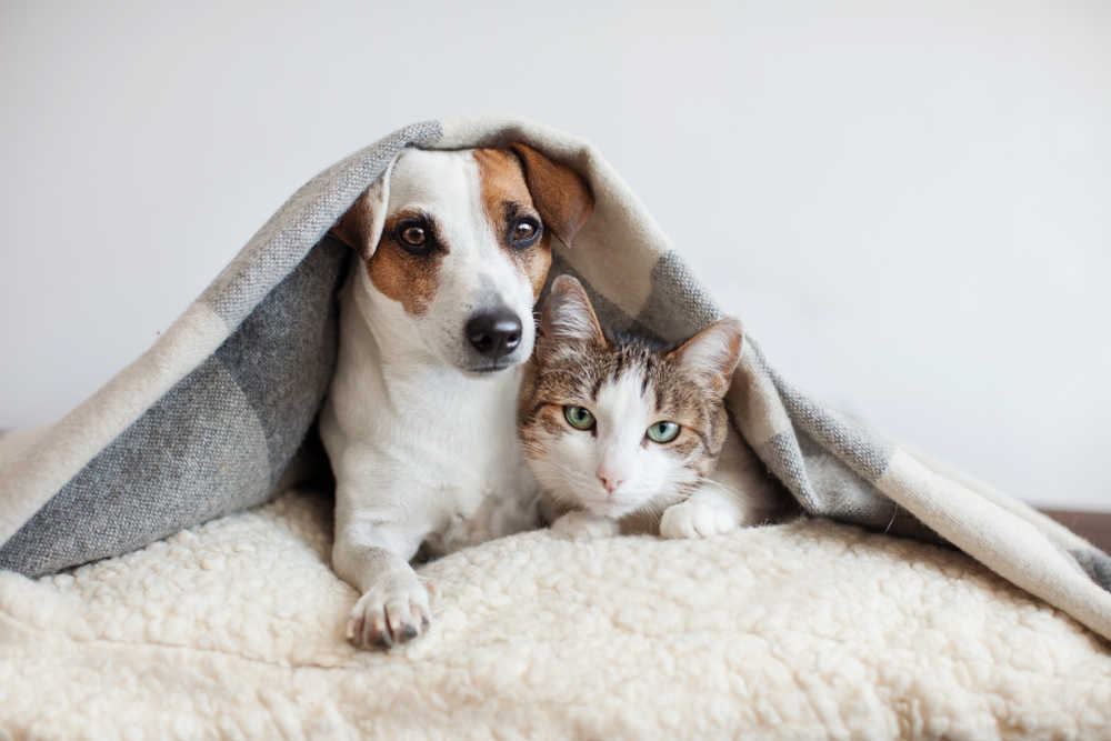 Limpieza en los hogares con mascotas
